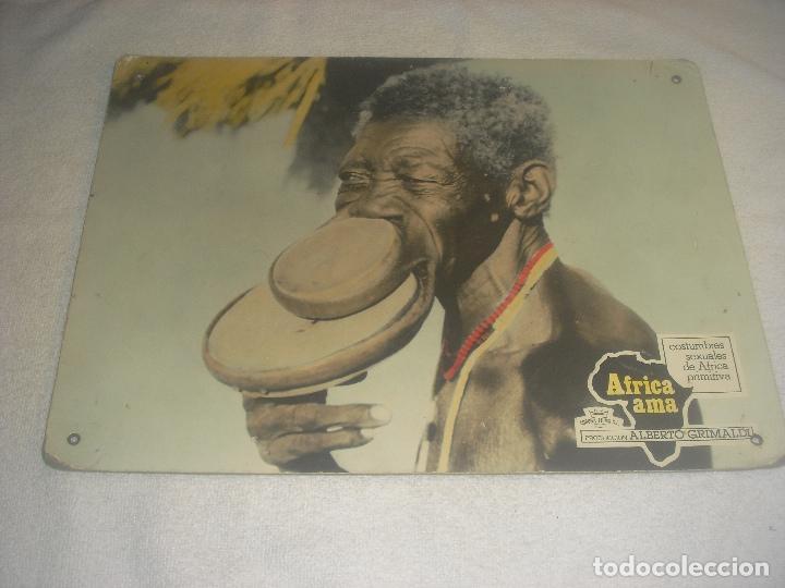 AFRICA AMA. ALBERTO GRIMALDI . COSTUMBRES SEXUALES DE AFRICA PRIMITIVA , CARTON 38 X 28 CM. (Cine - Posters y Carteles - Documentales)