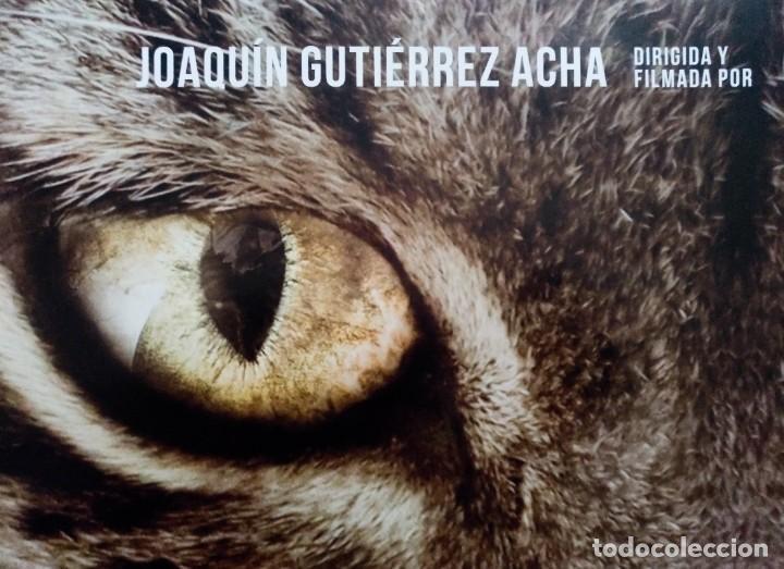 Cine: DEHESA CARTEL DE CINE ESCONDITE DEL LINCE 2019 JOAQUIN GUTIERREZ FELIX RODRIGUEZ DE LA FUENTE DVD - Foto 2 - 273285143