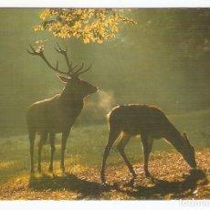 Calendarios: CALENDARIO DE BOLSILLO AÑO 1991 FAUNA / ANIMALES - CIERVOS - SIN PUBLICIDAD - VER FOTO REVERSO. Lote 245781455