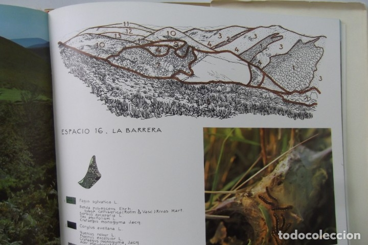 Libros: # EL CAMINO REAL DEL PUERTO LA MESA - VIA ROMANA #COLEGIO DE ARQUITECTOS DE LEON Y ASTURIAS# FIRMADO - Foto 55 - 181113742