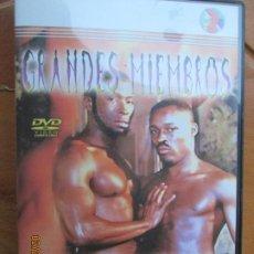 Peliculas: GRANDES MIEMBROS SIEMPRE ERECTOS - PELICULA PORNO GAY - DVD SOLO PARA MAYORES. Lote 245305235
