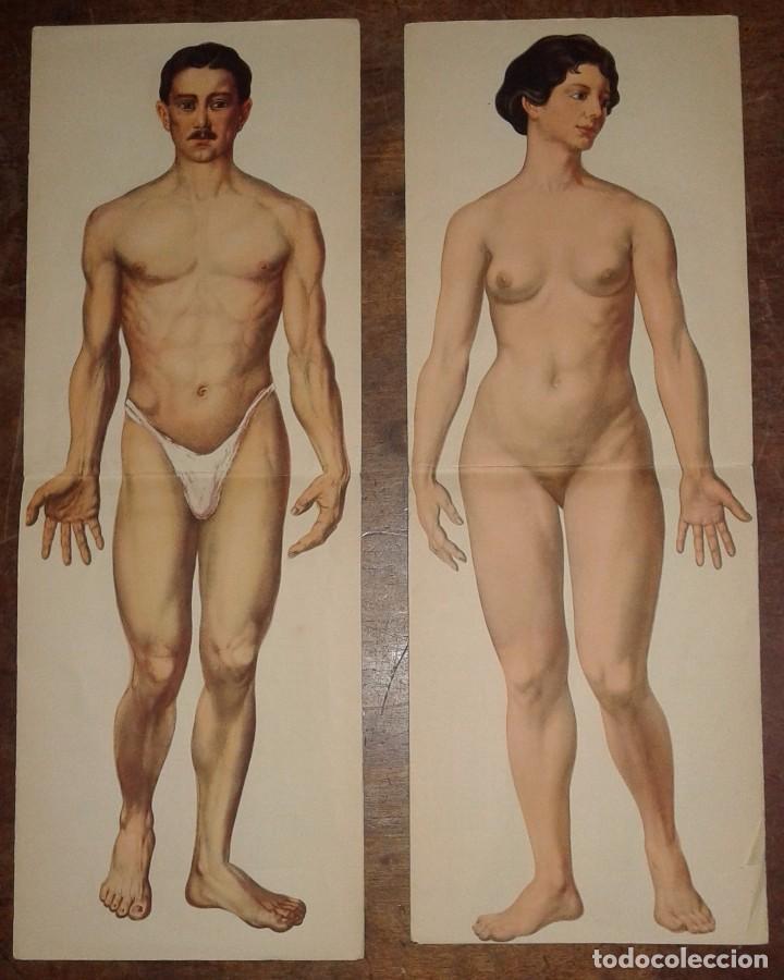 dos antiguos desplegables del cuerpo humano, ma - Comprar Carteles ...
