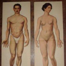 Dos antiguos desplegables del cuerpo humano, masculino y femenino, años 30