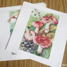 Coleccionismo de carteles: 6 LAMINAS ANTIGUAS DE SETAS. Lote 176214302