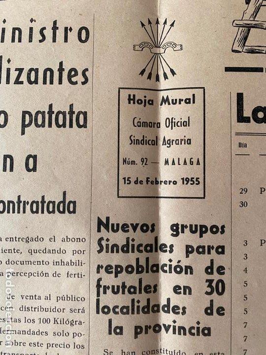 Coleccionismo de carteles: HOJA MURAL CAMARA OFICIAL SINDICAL AGRICOLA EL CAMPO MALAGUEÑO , 1955 - Foto 2 - 194061650