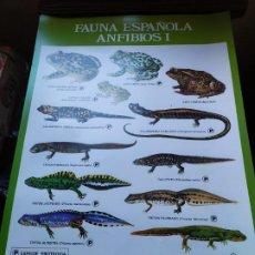 Coleccionismo de carteles: PÓSTER FAUNA ESPAÑOLA ANFIBIOS I - 1983. Lote 195895555