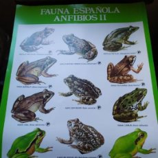 Coleccionismo de carteles: PÓSTER FAUNA ESPAÑOLA ANFIBIOS II - 1983. Lote 195895648