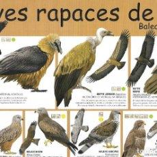 Colecionismo de cartazes: POSTER AVES RAPACES DE LA PENÍNSULA IBÉRICA. Lote 222147920