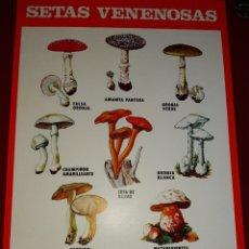 Coleccionismo de carteles: CARTEL SETAS VENENOSAS INSTITUTO PARA LA CONSERVACIÓN DE LA NATURALEZA - 1974. Lote 222317341