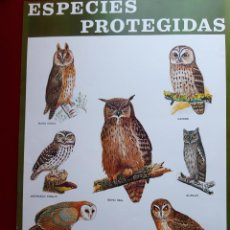 Coleccionismo de carteles: CARTEL ESPECIES PROTEGIDAS INSTITUTO PARA LA CONSERVACIÓN DE LA NATURALEZA - 1974. Lote 222317753