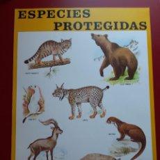 Coleccionismo de carteles: CARTEL ESPECIES PROTEGIDAS INSTITUTO PARA LA CONSERVACIÓN DE LA NATURALEZA - 1974. Lote 222317890