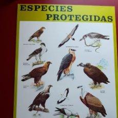 Coleccionismo de carteles: CARTEL ESPECIES PROTEGIDAS INSTITUTO PARA LA CONSERVACIÓN DE LA NATURALEZA - 1974. Lote 222317997