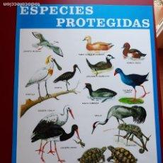 Coleccionismo de carteles: CARTEL ESPECIES PROTEGIDAS INSTITUTO PARA LA CONSERVACIÓN DE LA NATURALEZA - 1974. Lote 222318115
