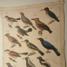 Coleccionismo de carteles: SCHNAPPER (PARGOS) LAMINA 73, TOMO VII OKEN'S ALLGEMEINE NATURGESCHITE CA 1838. Lote 230298335