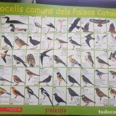 Colecionismo de cartazes: POSTER 50 OCELLS COMUNS DELS PAÏSOS CATALANS. CAIXA CATALUNYA, OBRA SOCIAL. Lote 262490700