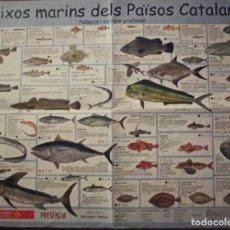 Collectionnisme d'affiches: PEIXOS MARINS PAISOS CATALANS. Lote 276359068