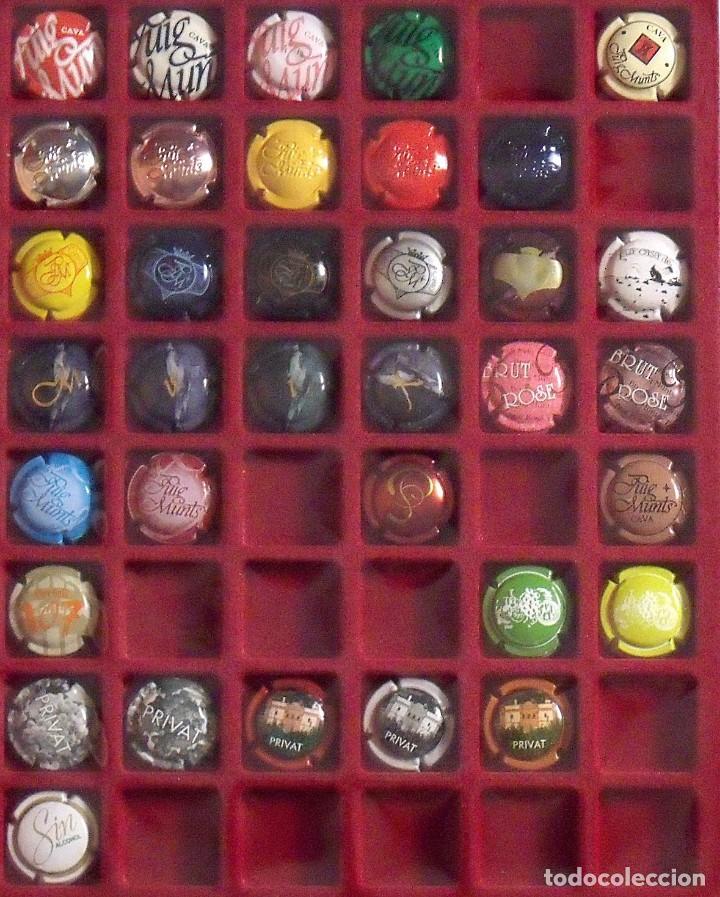 Coleccionismo de cava: ÁLBUM LOTE O COLECCIÓN DE 134 PLACAS DIFERENTES DE CAVA. LAS MARCAS EMPIEZAN POR LA LL, N, O Y P. - Foto 4 - 131618802