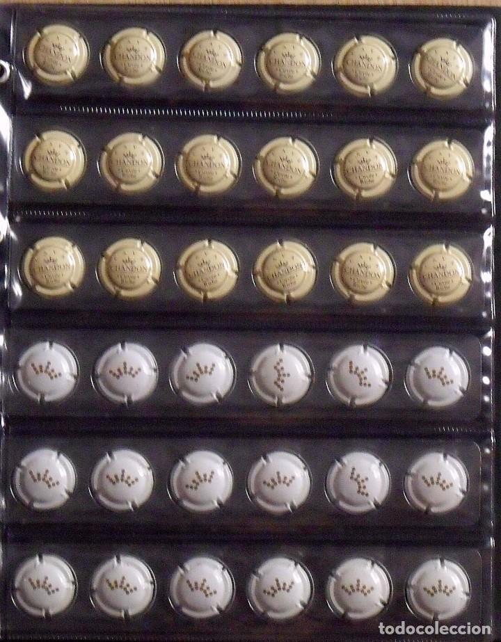 Coleccionismo de cava: ÁLBUM LOTE O COLECCIÓN DE 302 PLACAS DIFERENTES DE CAVA. LAS MARCAS EMPIEZAN POR LA LETRA C. - Foto 7 - 131620426