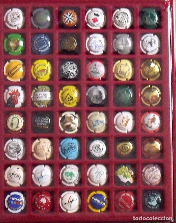 Coleccionismo de cava: ÁLBUM LOTE O COLECCIÓN DE 314 PLACAS DIFERENTES DE CAVA, PIRULAS Y CHAMPAGNE. - Foto 3 - 131621614
