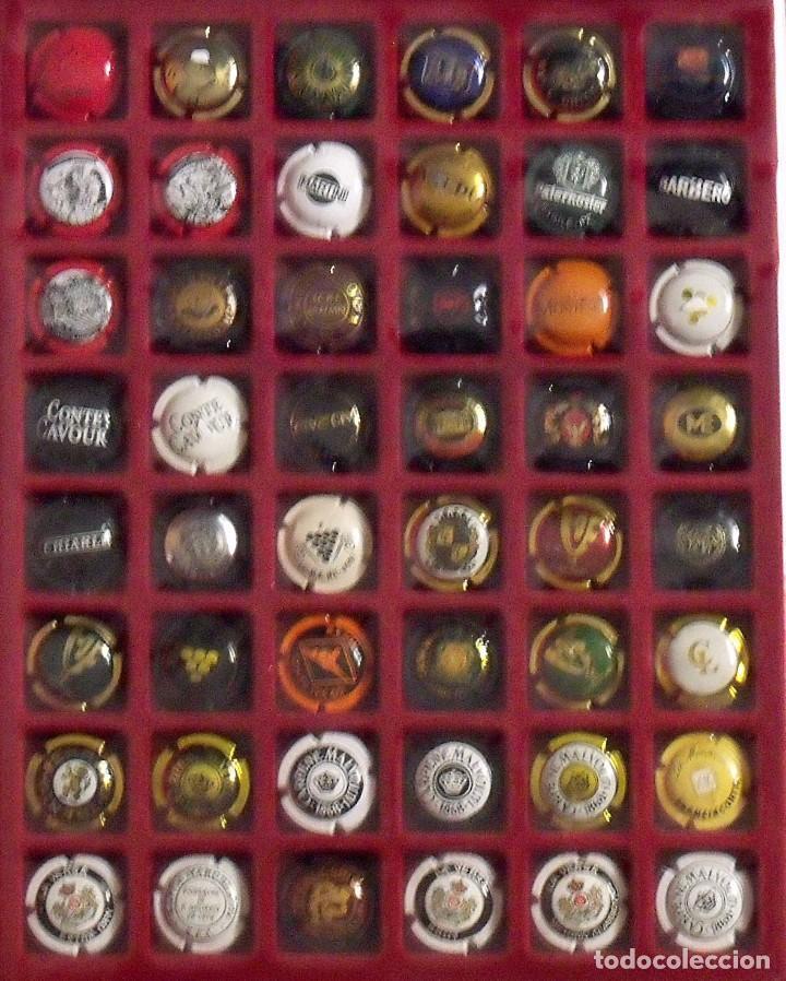 Coleccionismo de cava: ÁLBUM LOTE O COLECCIÓN DE 314 PLACAS DIFERENTES DE CAVA, PIRULAS Y CHAMPAGNE. - Foto 6 - 131621614