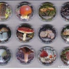 Coleccionismo de cava: SERIE COMPLETA DE 12 PLACAS DE CAVA MONTECARO DE SETAS (MUSHROOM-HONGO-SETA). Lote 148044050