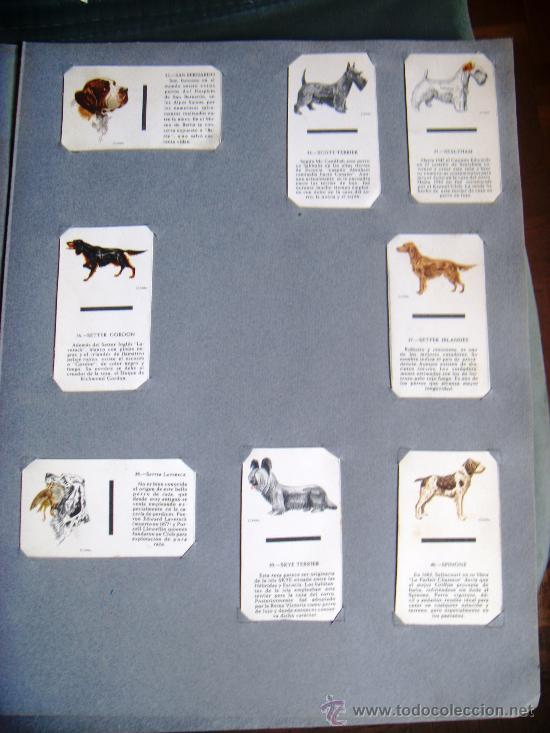 Cajas de Cerillas: ALBUM COLECCION COMPLETA DE CERILLAS, PERROS DE RAZA 40 CARATULAS COMPLETAS AÑOS 60 - Foto 4 - 33319286