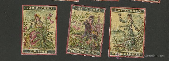 Cajas de Cerillas: LAS FLORES - COLECCION 15 CROMOS CAJAS DE CERILLAS - (V-1155) - Foto 5 - 44428689