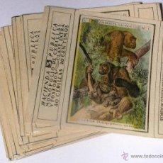 Scatole di Cerini: ANIMALES SALVAJES SERIE 2. COMPLETA 35 ETIQUETAS CAF.AÑOS 20/30.40 CERILLAS 20 CENTIMOS. Lote 45501571