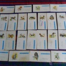Cajas de Cerillas: PERROS DE RAZA 22 CAJAS DE CERILLAS PLANCHA. FOSFORERA ESPAÑOLA AÑOS 60. MUY RARAS.. Lote 52976268