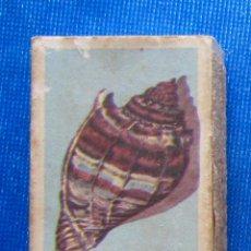 Cajas de Cerillas: 2.- CARACOL MARINO. CARACOLAS. FOSFORERA CANARIENSE. CAJA CERILLAS. Lote 54514074