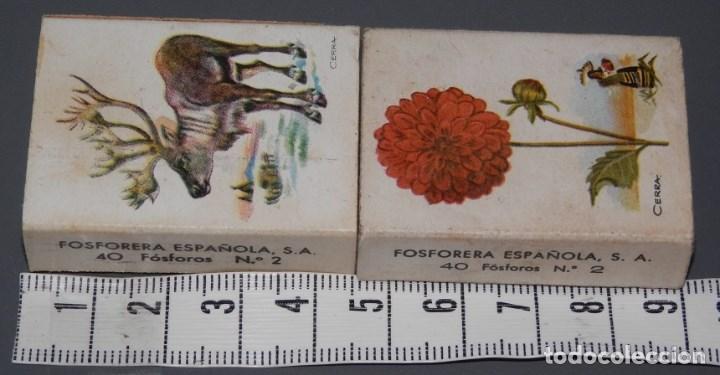 CAJAS DE CERILLAS ANTIGUAS (Coleccionismo - Objetos para Fumar - Cajas de Cerillas)