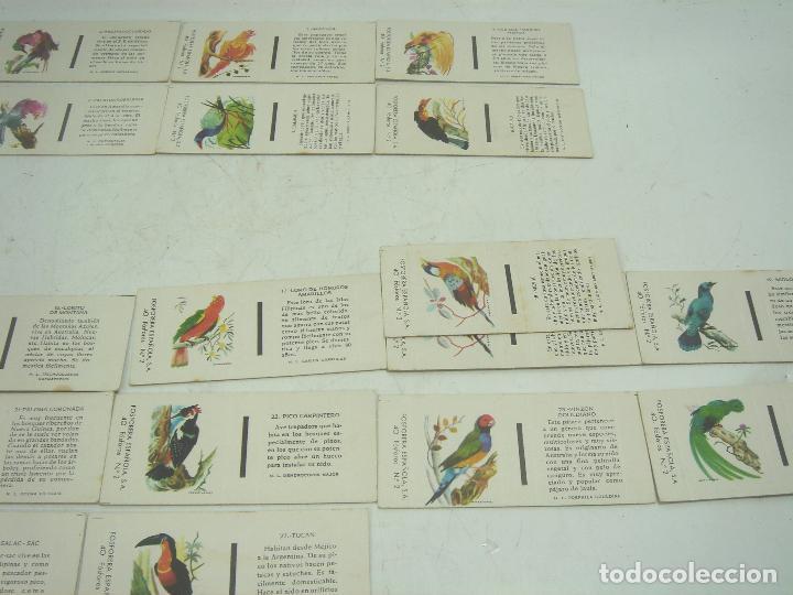Cajas de Cerillas: COLECCION 23X CERILLAS PLANCHA - PAJAROS - DE CAJAS FOSOFORERA ESPAÑOLA CAJA - Foto 3 - 112962943