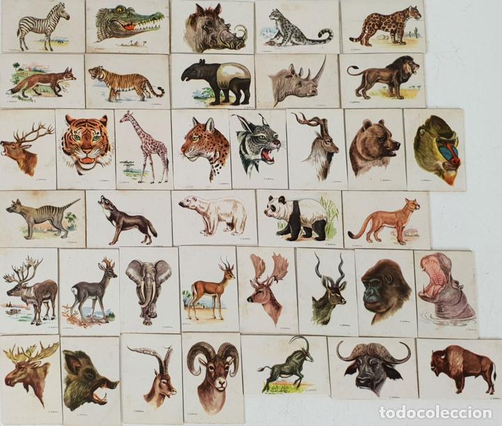 COLECCIÓN DE 38 CROMOS. CAJAS DE CERILLAS. SERIE ANIMALES. SIGLO XX. (Coleccionismo - Objetos para Fumar - Cajas de Cerillas)