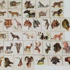 Cajas de Cerillas: COLECCIÓN DE 38 CROMOS. CAJAS DE CERILLAS. SERIE ANIMALES. SIGLO XX. . Lote 132291830