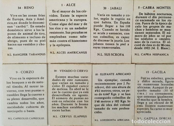 Cajas de Cerillas: COLECCIÓN DE 38 CROMOS. CAJAS DE CERILLAS. SERIE ANIMALES. SIGLO XX. - Foto 2 - 132291830