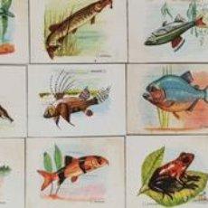 Cajas de Cerillas: COLECCION DE 25 CROMOS. CAJAS DE CERILLAS. SÉRIE FAUNA FLUVIAL. SIGLO XX. . Lote 132305294