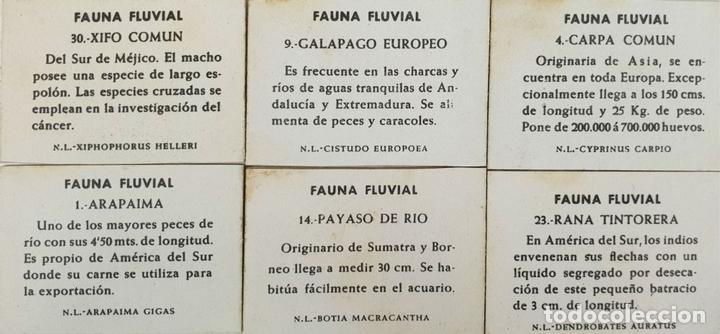 Cajas de Cerillas: COLECCION DE 25 CROMOS. CAJAS DE CERILLAS. SÉRIE FAUNA FLUVIAL. SIGLO XX. - Foto 2 - 132305294