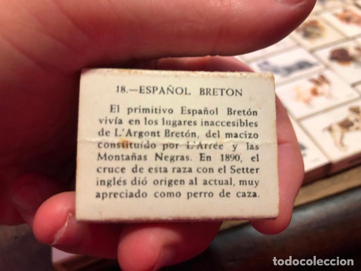 Cajas de Cerillas: COLECCION CAJAS DE CERILLA FOSFORERA ESPAÑOLA SOBRE PERROS - 40 UNIDADES - Foto 8 - 133047030