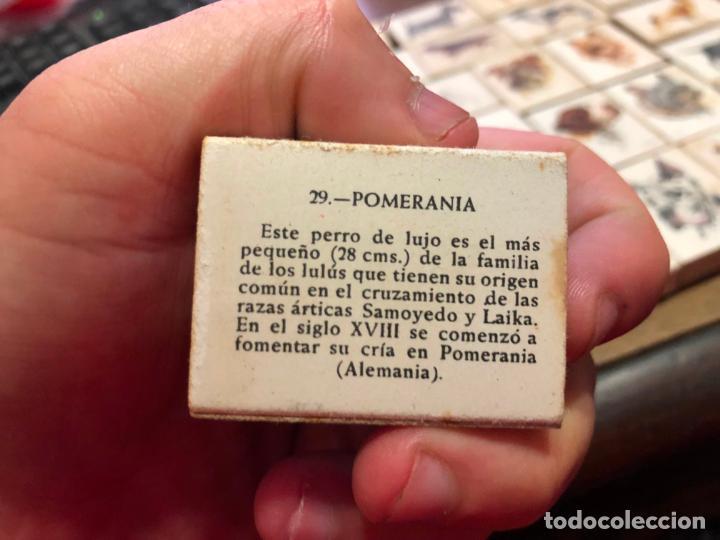Cajas de Cerillas: COLECCION CAJAS DE CERILLA FOSFORERA ESPAÑOLA SOBRE PERROS - 40 UNIDADES - Foto 9 - 133047030