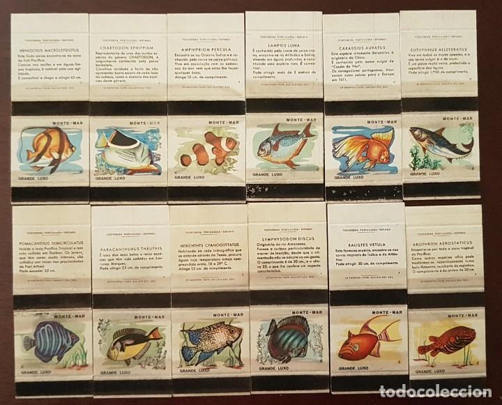 COLECCION 12 CAJAS DE CERILLAS PECES FOSFORERA PORTUGUESA (Coleccionismo - Objetos para Fumar - Cajas de Cerillas)