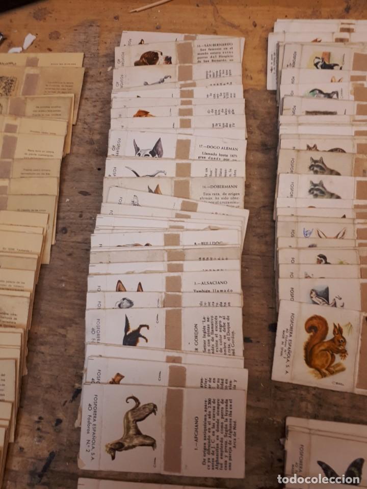 Cajas de Cerillas: Colección cajas cerillas, diversas colecciones. - Foto 7 - 203297830