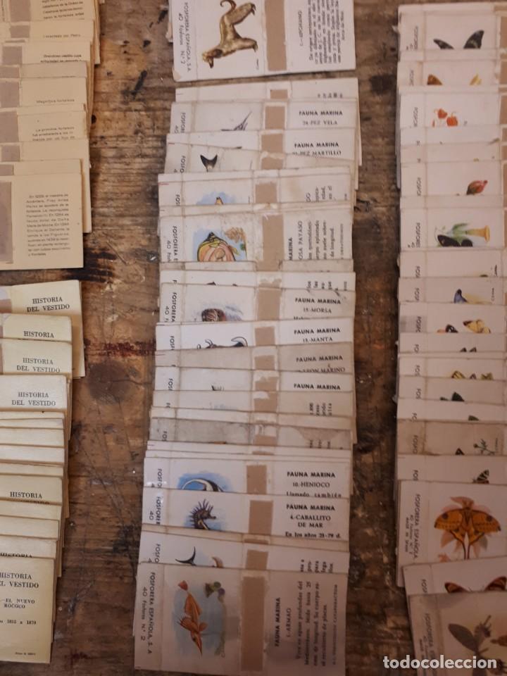 Cajas de Cerillas: Colección cajas cerillas, diversas colecciones. - Foto 8 - 203297830