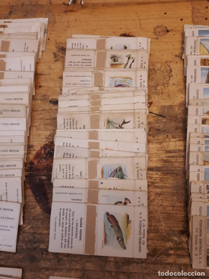 Cajas de Cerillas: Colección cajas cerillas, diversas colecciones. - Foto 11 - 203297830