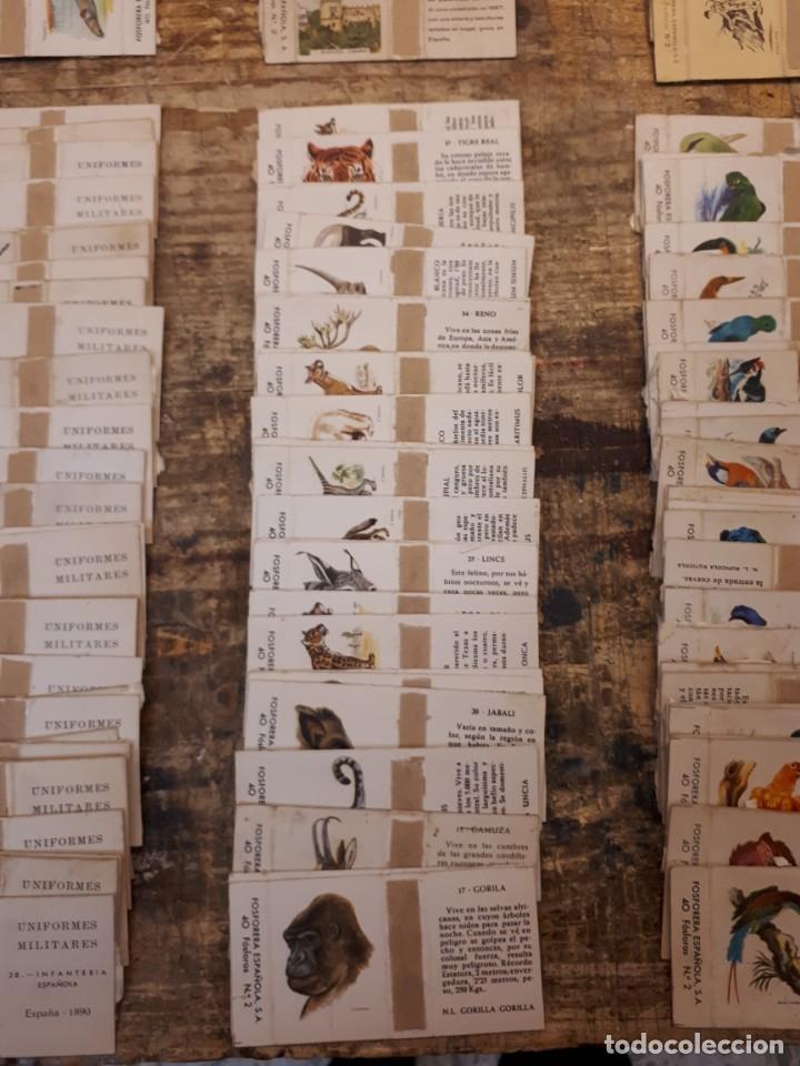 Cajas de Cerillas: Colección cajas cerillas, diversas colecciones. - Foto 14 - 203297830
