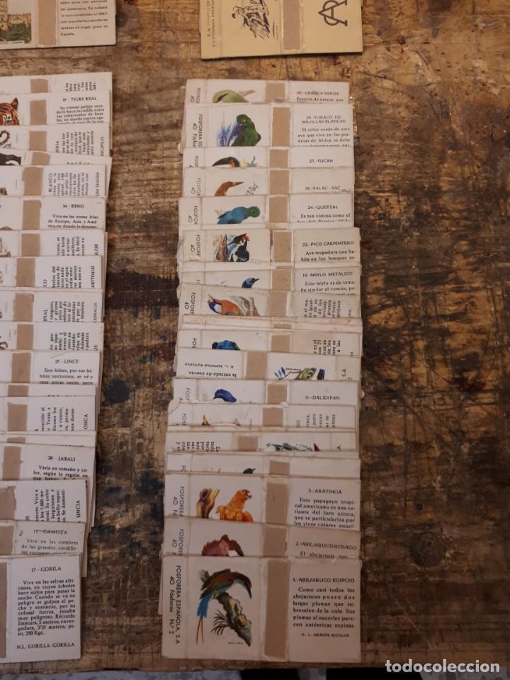 Cajas de Cerillas: Colección cajas cerillas, diversas colecciones. - Foto 16 - 203297830