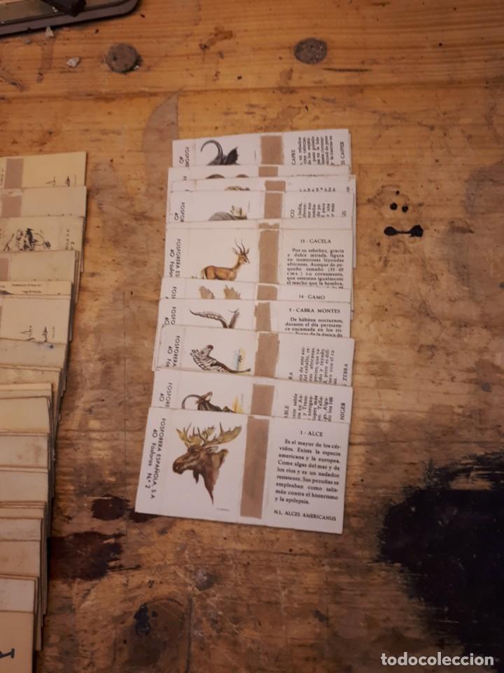 Cajas de Cerillas: Colección cajas cerillas, diversas colecciones. - Foto 17 - 203297830