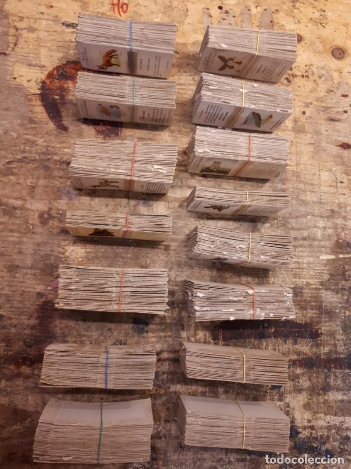 Cajas de Cerillas: Colección cajas cerillas, diversas colecciones. - Foto 19 - 203297830