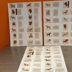 Cajas de Cerillas: COLECCION COMPLETA DE 40 CAJAS DE FOSFOROS SERIE RAZAS DE PERROS. Lote 232797070