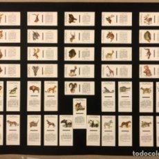 Cajas de Cerillas: LÁMINA CON 40 TAPAS CERILLAS COLECCIÓN ANIMALES SALVAJES (SERIE COMPLETA). FOSFORERA ESPAÑOLA.. Lote 265186594