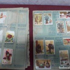 Coleccionismo deportivo: LOTE 105 CROMOS.... . Lote 140815398